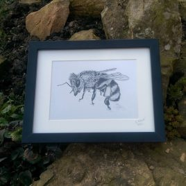 Honey Bee Fine Art Print