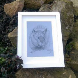 Brown Rat Fine Art Print