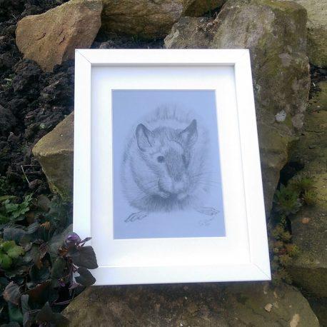 Brown Rat Fine Art Print