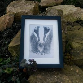 Badger Fine Art Print