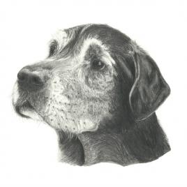 Arnie Bear Labrador