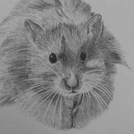 George Hamster
