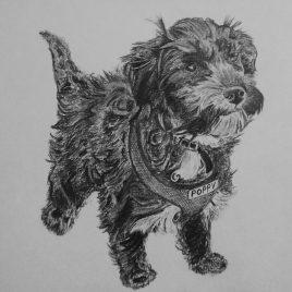 Poppy the Terrier
