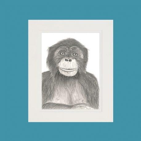 Archie the Chimpanzee