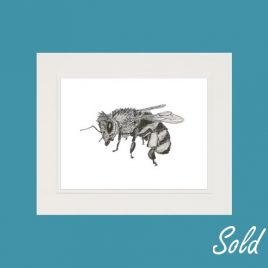 Beatrix the Honeybee