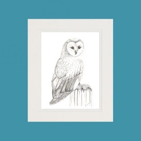 Cissie the Barn Owl