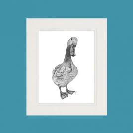 Duck Fine Art Print
