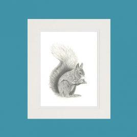 Squirrel Fine Art Print