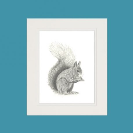 Hamish the Red Squirrel