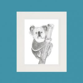 Kirra the Koala Fine Art Print