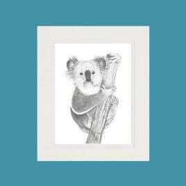 Kirra the Koala Fine Art Print