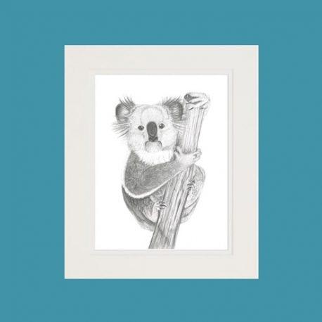 Kirra the Koala