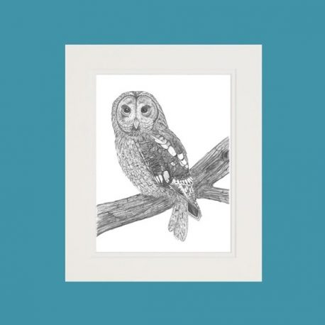 Athena the Tawny Owl