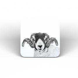 John the Sheep Coaster